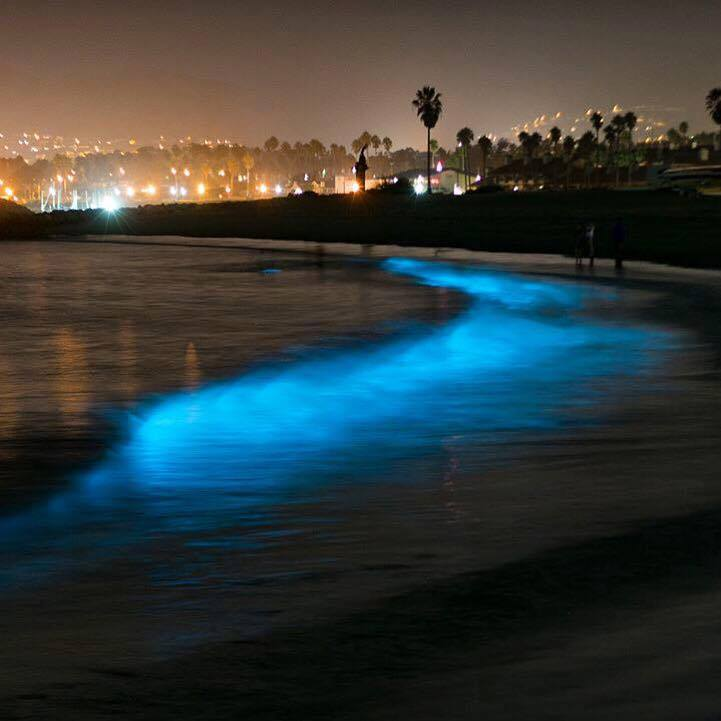 Bioluminecense